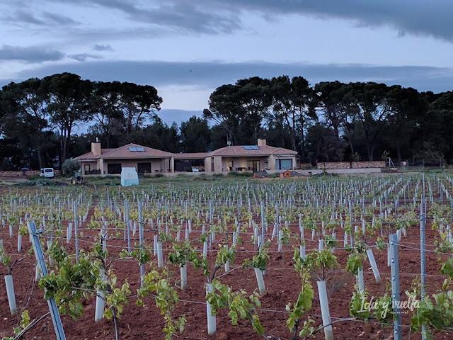 Monte Higueras vista con viñedos