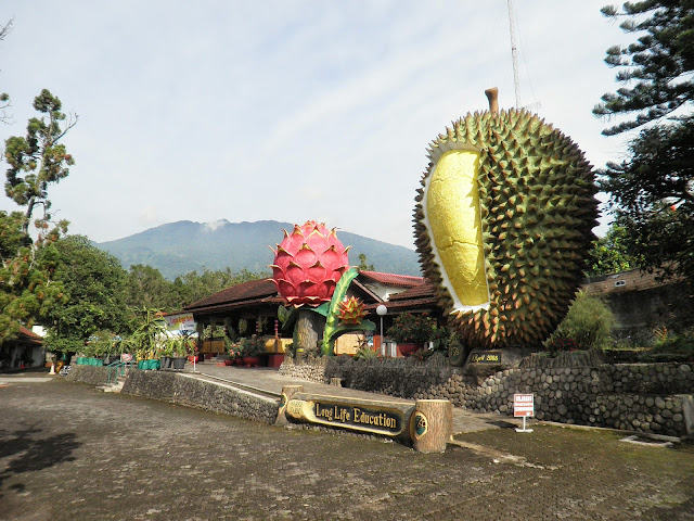 Warso Farm, Tempat Wisata Alam di Bogor Bagi Para Pecinta Durian