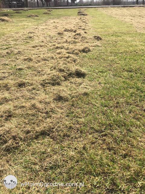 usługa wertykulacji trawnikow warszawa grojec warka piaseczno nadarzyn konstancin lesznowola