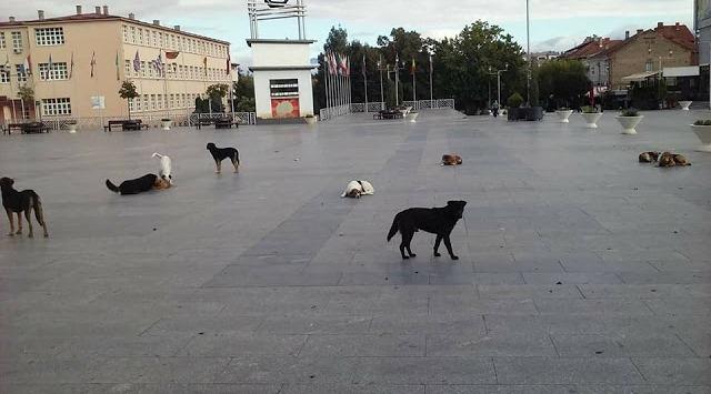 Bild des Tages - Früh am Morgen in Strumica