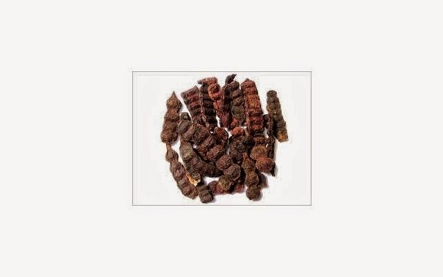 Benefits Of Shikakai Acacia Concinna Promote Hair Growth