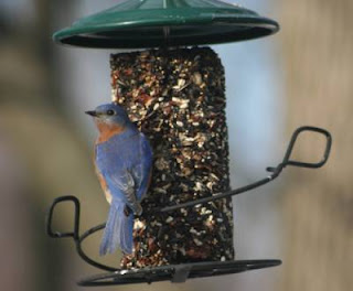 Make Your Own Bird Food Cylinder