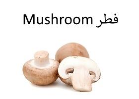فطر : Mushroom
