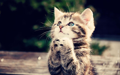 Cute Cats Kitty Pets 25
