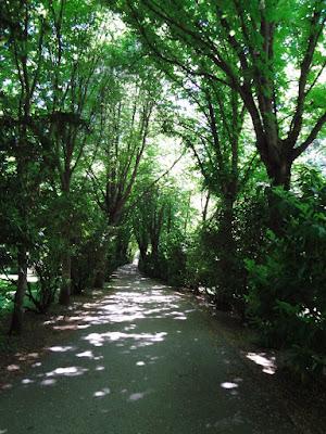 Paseos arbolados en el Campo del Moro