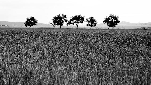 Pola uprawne i drzewa. Słowacja. fot. Łukasz Cyrus
