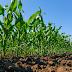 Clima deve favorecer aumento da produtividade para as lavouras do Oeste da Bahia