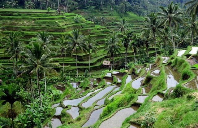 12 Tempat Wisata Bali Yang Paling Sering Dikunjungi Heqris