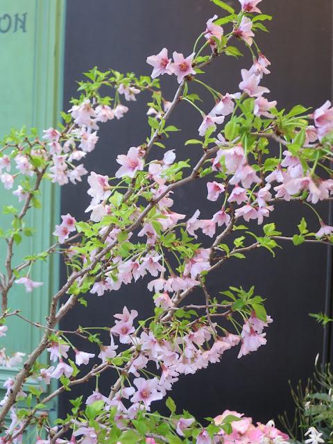 branche-fleurie.jpeg