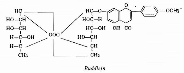 Thành phần hóa học Mật Mông Hoa - Buddleia officinalis (Buddleia madagascariensis) - Nguyên liệu làm thuốc Chữa bệnh Mắt Tai Răng Họng