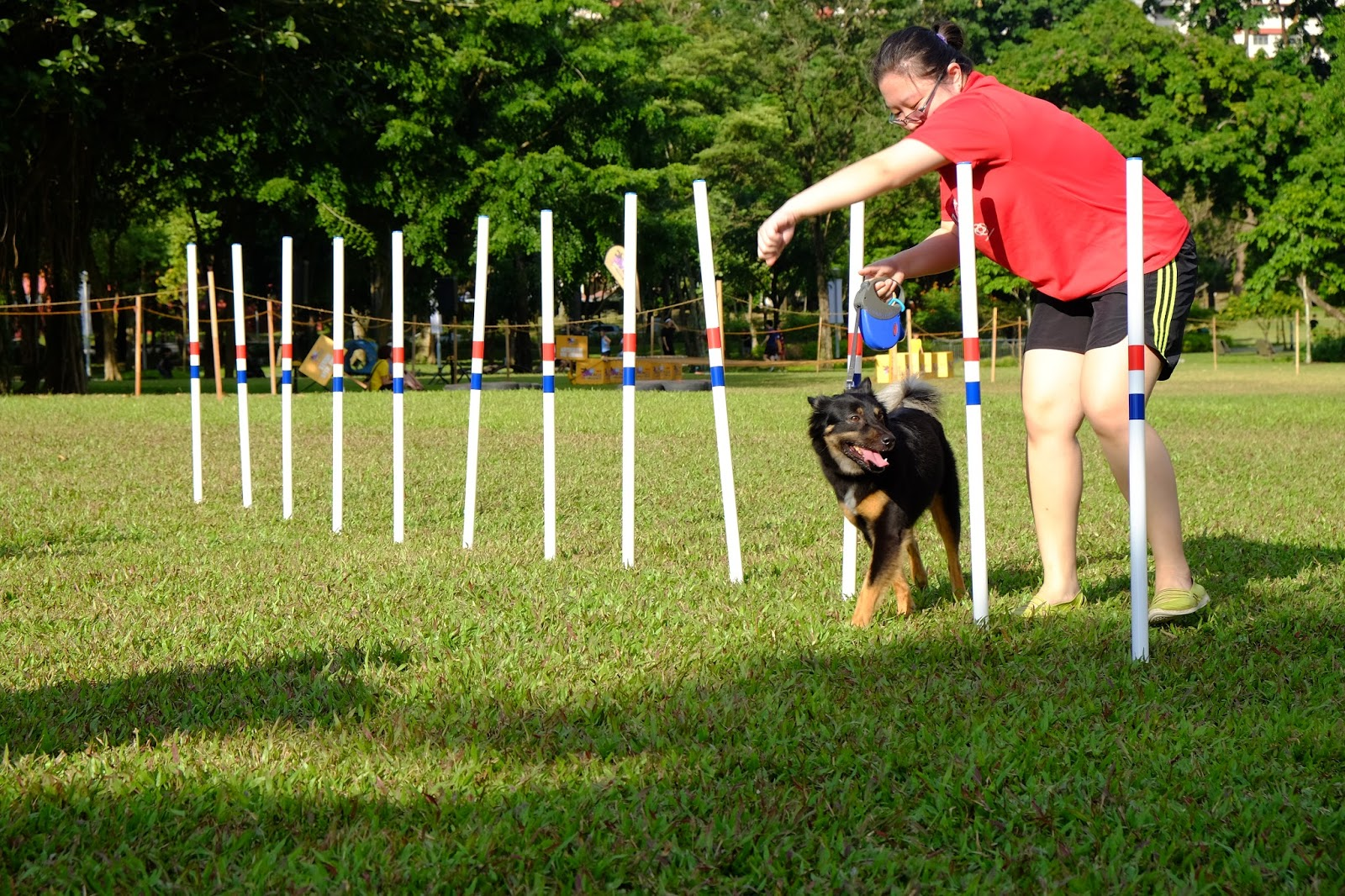 Video Trained Dogs Jumping Through Hoops