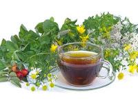 20 πιο σημαντικά βότανα