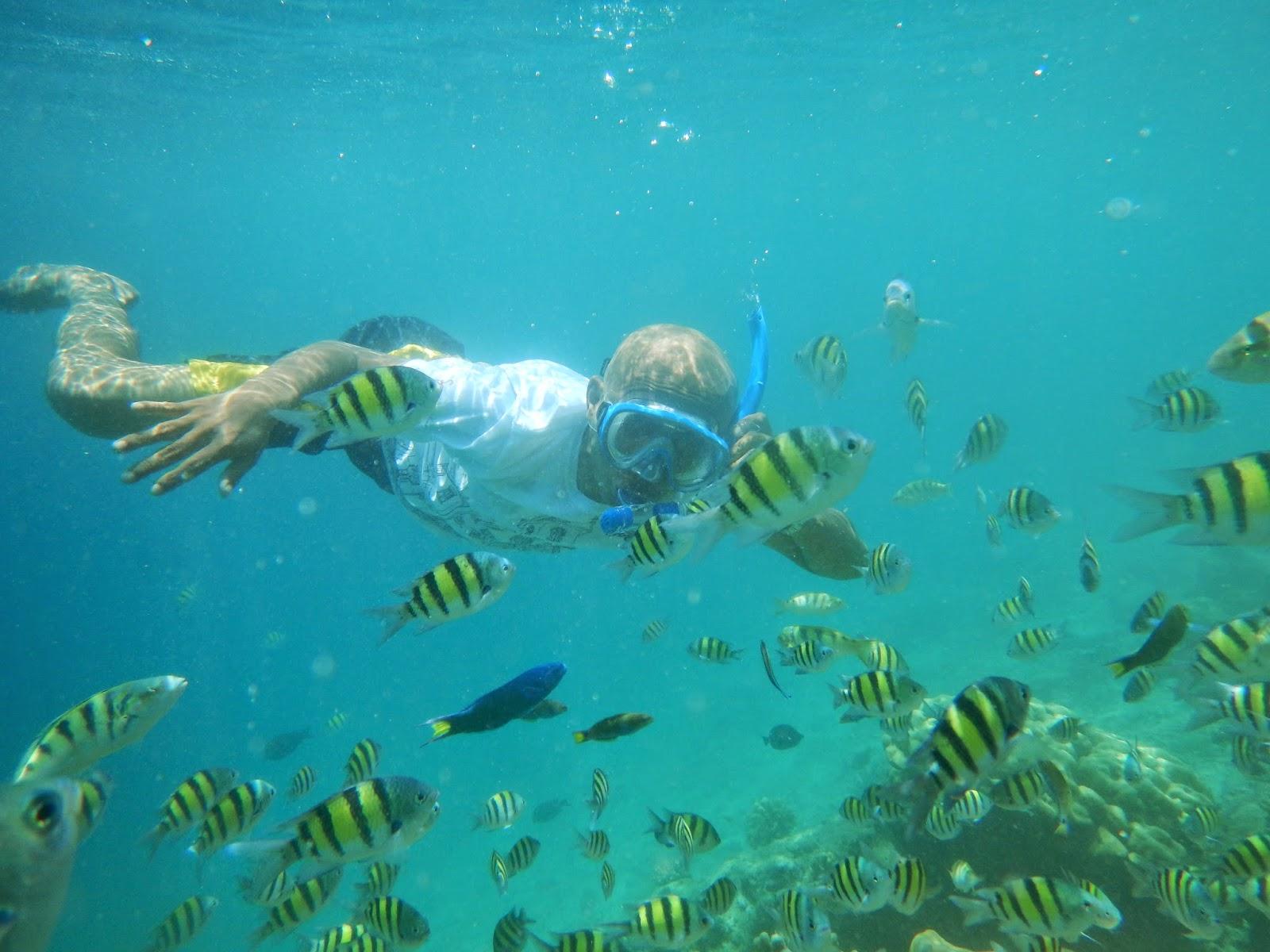 Snorkeling di Pulau Pagang