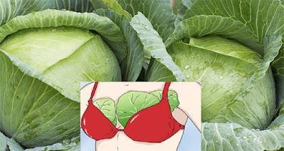 ماذا يحصل للمرأة اذا وضعت أوراق الملفوف على صدرها