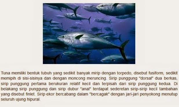 ikan tuna bentuknya mirip torpedo
