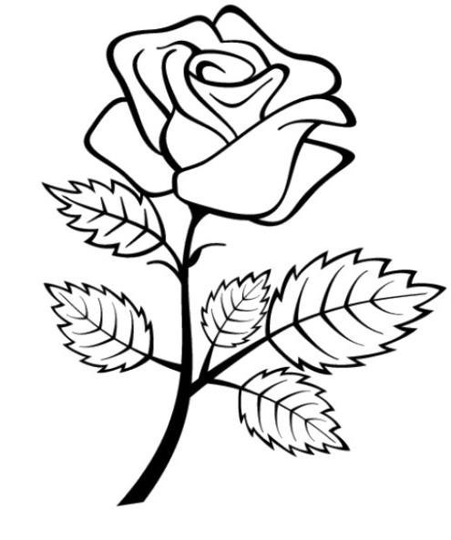 Gambar Bunga Mawar Arsiran Pensil Koleksi Gambar Bunga