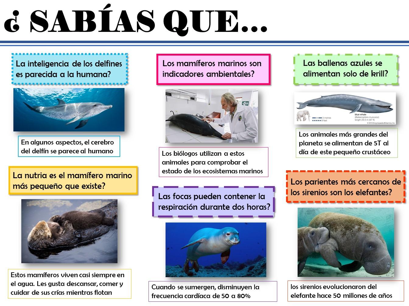 Sabías qué... (Mamíferos marinos) | Galería virtual de pósteres y ...