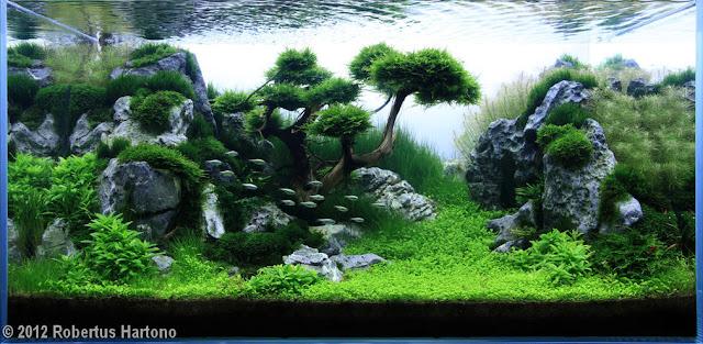 foto aquascape yang cantik dan unik dan menarik