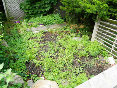 Leslieville Front Garden Cleanup Before by Paul Jung Gardening Services--a Toronto Organic Gardening Company