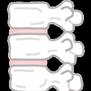 椎骨のイラスト