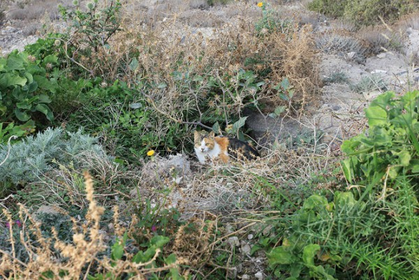 cats hiding in bushes