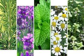 Εποχιακά φυτά και τα λαχανικά