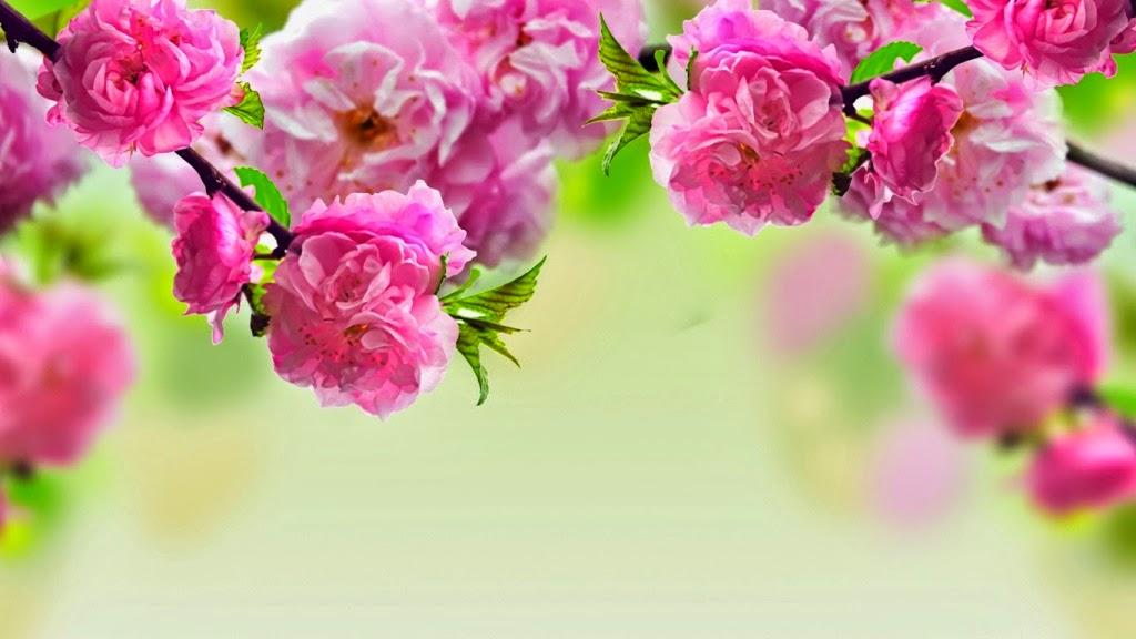 Kết quả hình ảnh cho ảnh hoa đào đẹp