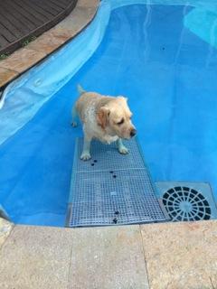 cães com lesão e piscinas