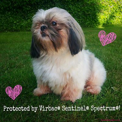 Vibrac Sentinel Spectrum! #SentinelSpectrum