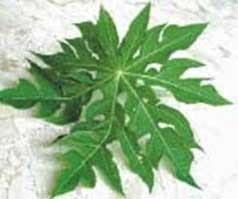 Manfaat buah dan daun Pepaya untuk kesehatan