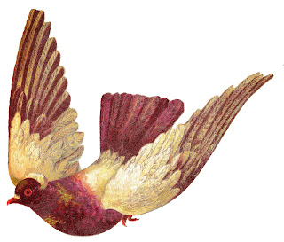 bird pigeon image animal clip art