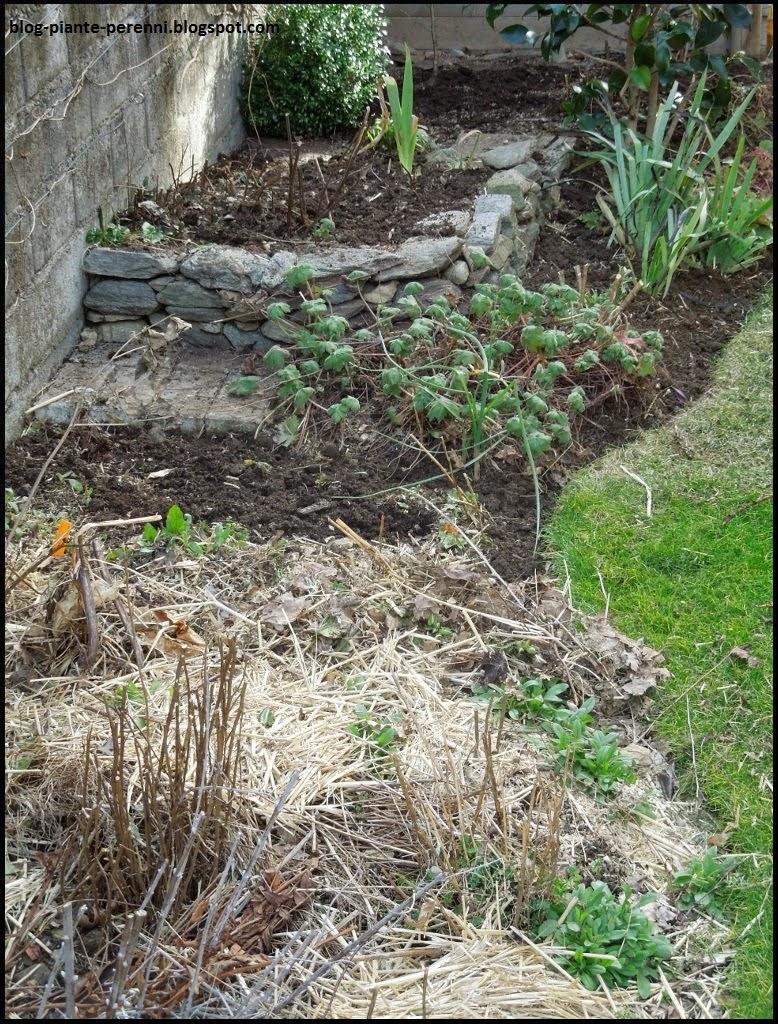 Piante Basse Da Aiuola un giardino di perenni in ticino