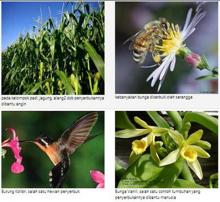 410 Gambar Perkembangbiakan Hewan Dan Tumbuhan HD