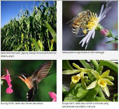 Macam-macam Perkembangbiakan Hewan dan Tumbuhan secara Generatif dan Vegetatif beserta Contohnya