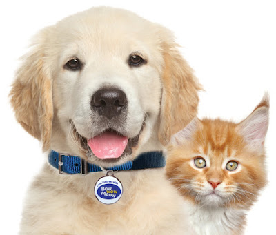 Bow-Wow-Meow-Pet-Insurance