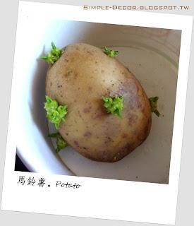 https://simple-decor.blogspot.com/2020/04/greeny-garden-potato-growing.html