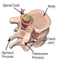 Gambar Sumsum tulang belakang