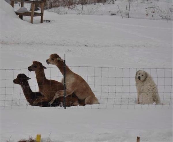 Biểu cảm chết cười của 18 chú chó mặt ngu đừng hỏi