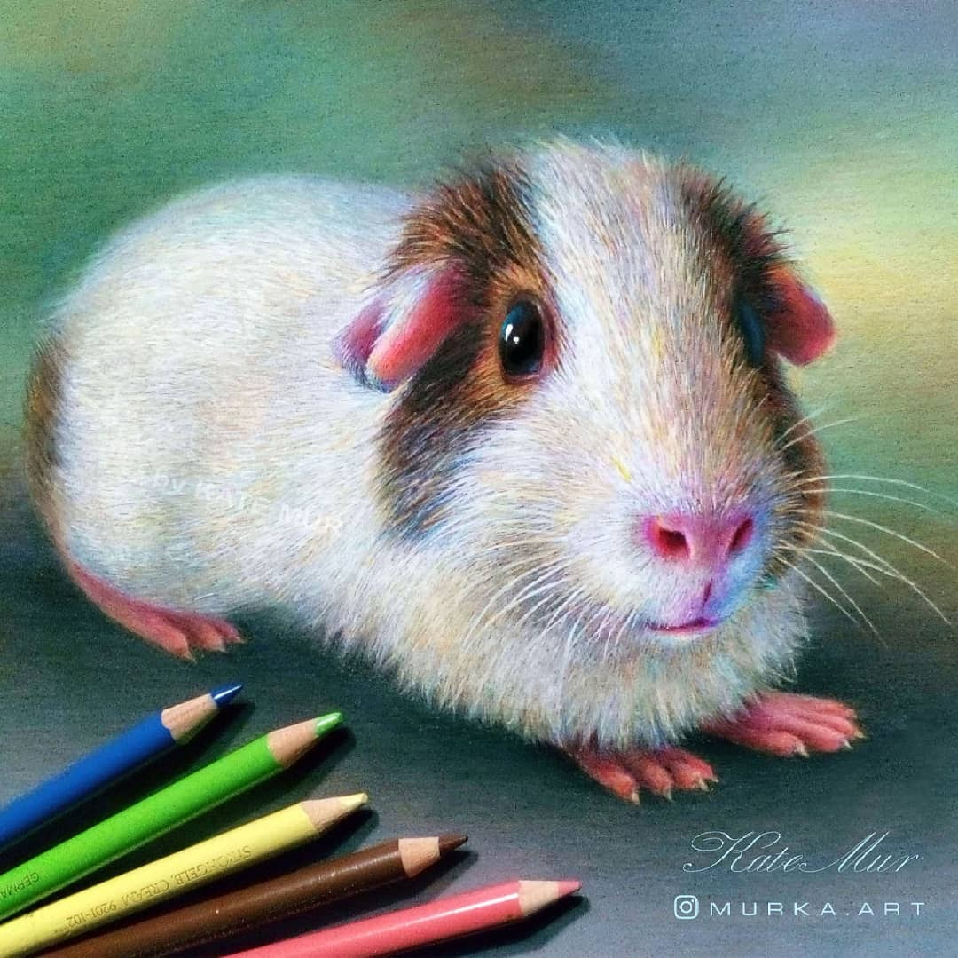 09-Guinea-Pig-Kate-Mur-Animal-Art-with-Pencil-Ballpoint-Pen-and-Paint-www-designstack-co