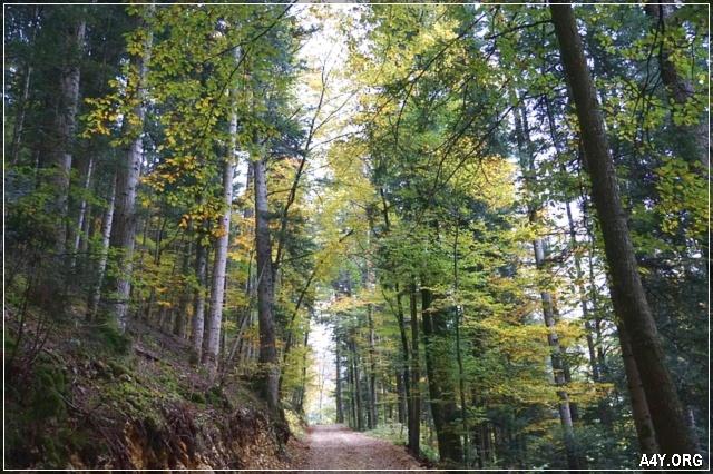 rừng cây tháng 9