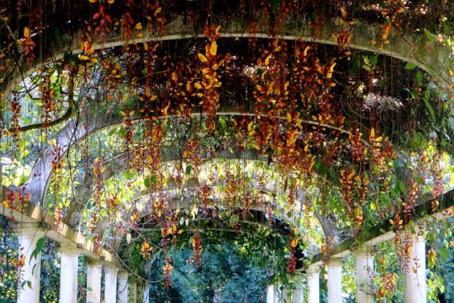 A luz, refletida nas folhas, passa uma sensação mágica ao caminho e ao caminhante