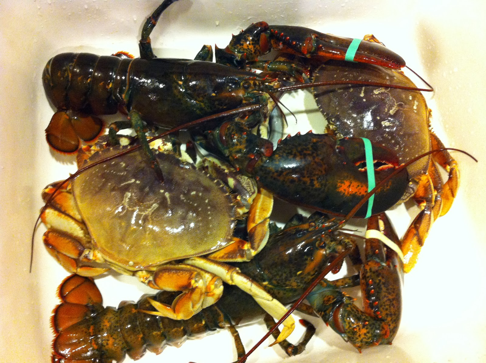 Food Sparks A Christmas Feast Of Crabs And Lobsters