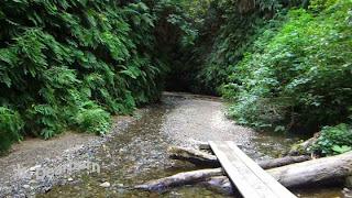 http://theearthminute.blogspot.com/2015/01/discover-fern-canyon-prairie-creek.html