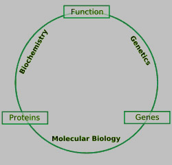 feeding relationship among living organisms cells