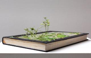 obras artísticas con libros y naturaleza.