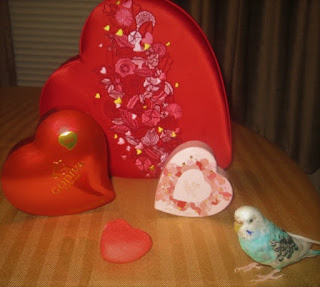Parakeet Valentine's Day