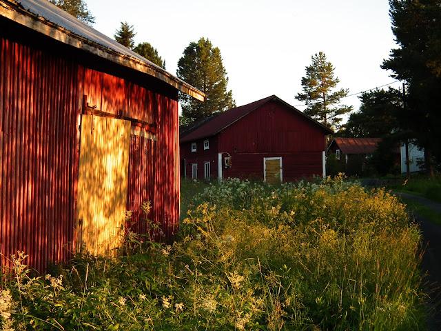 keltainen ovi, hirsiseinä, punamulta, valo, kukkaniitty
