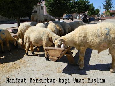 Manfaat Berkurban bagi Umat Muslim - Situs Islami