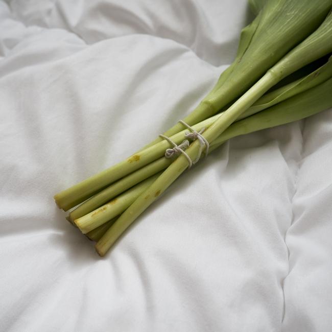 jak podciąć łodygi tulipanów