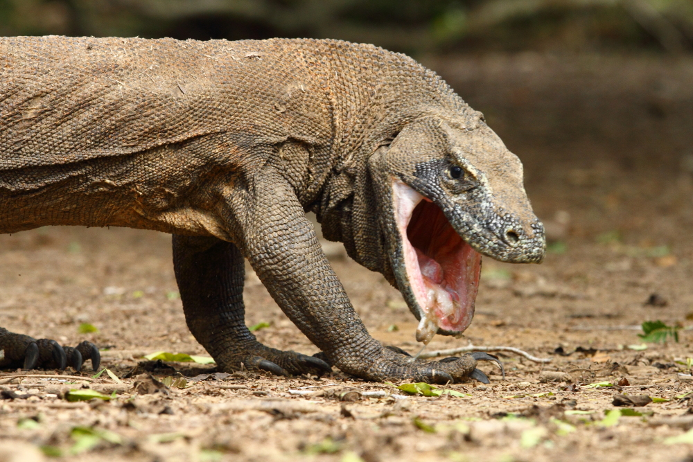 The Top Everything: Most Dangerous Animals in The World